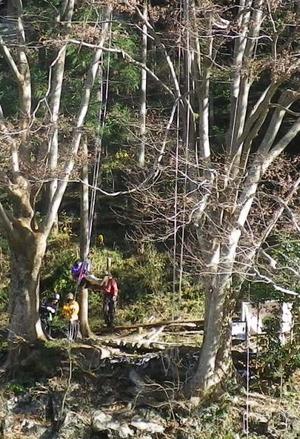 20111220_tree_climbing